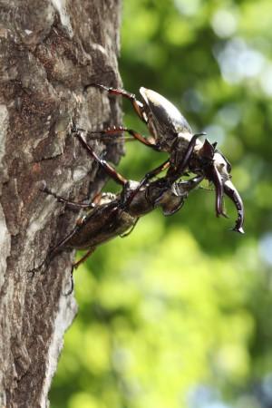里山フォーラム「誰も知らない!昆虫の不思議」