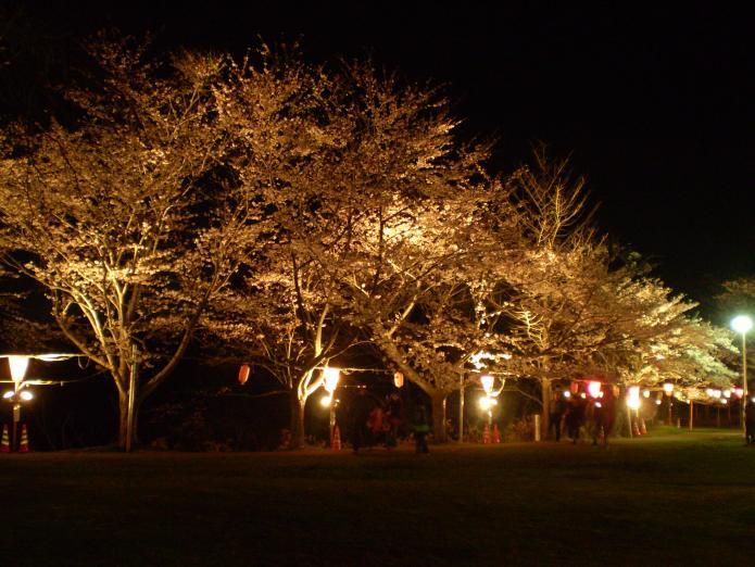 赤坂山公園観桜会