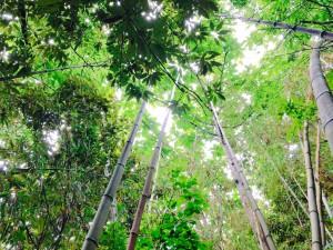 竹林整備をしながら七夕の笹を調達しよう!