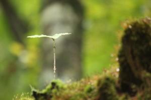 里山リトリート ~自然と人と自分と対話する・森でののんびり時間~