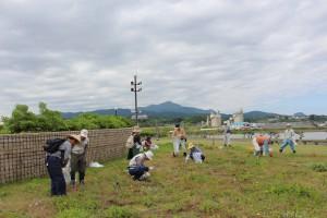 海浜植物ゾーンの整備作業と観察会
